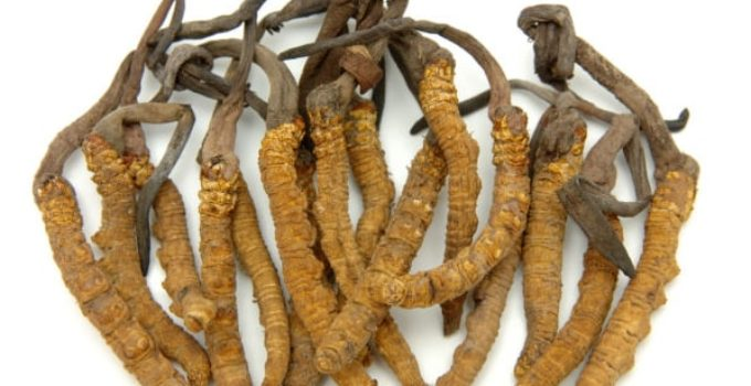 Cordyceps For Male Enhancement